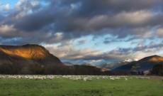 Roman Břenek: Přírodu Nového Zélandu znám lépe než vČechách